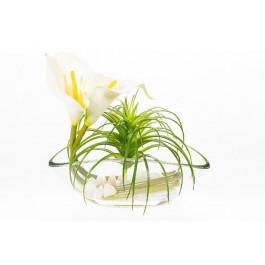 Flor de Cala Color Blanco y Tillandsia