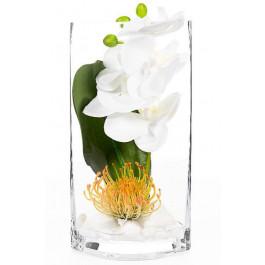 Orquídea con hoja y protea.