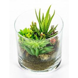 Suculenta con Aloe.