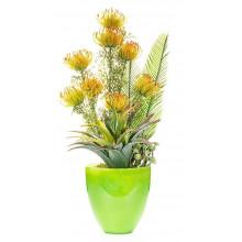 Spiny Agave, proteas y suculentas.